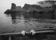 """Berengo Gardin Gianni摄影作品  Berengo Gardin Gianni,意大利摄影师,出生于1930年,24岁时拍下了第一张照片,在先后住过罗马、威尼斯和巴黎等地之后,他在米兰定居,客户包括《费加罗报》、《时代周刊》、宝洁公司等,编写过210本摄影书,作品被纽约现代艺术博物馆等收藏。1963年荣获World Press Photo(荷赛)奖,1972年《Modern Photography》杂志将他评选为""""全球32位顶级摄影师""""之一。"""